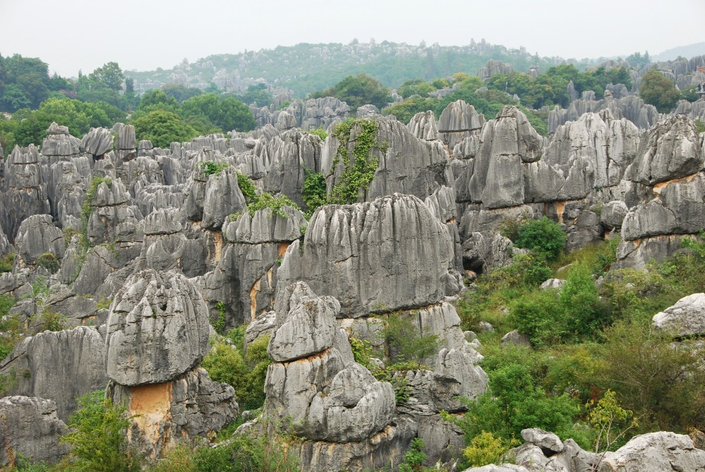 Stenen woud