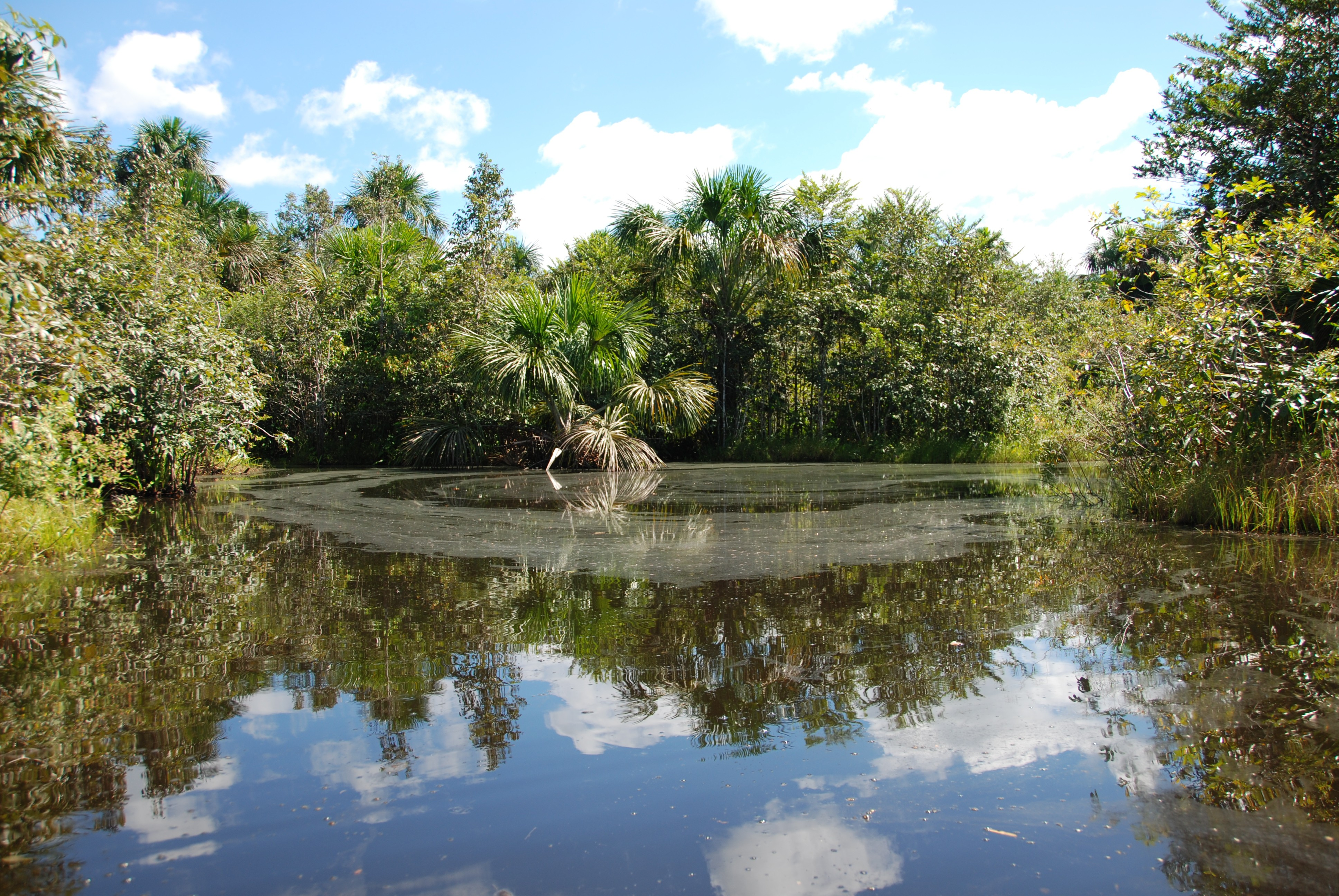 Moeras in de Amazone