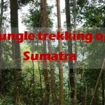 Jungle trekking op Sumatra