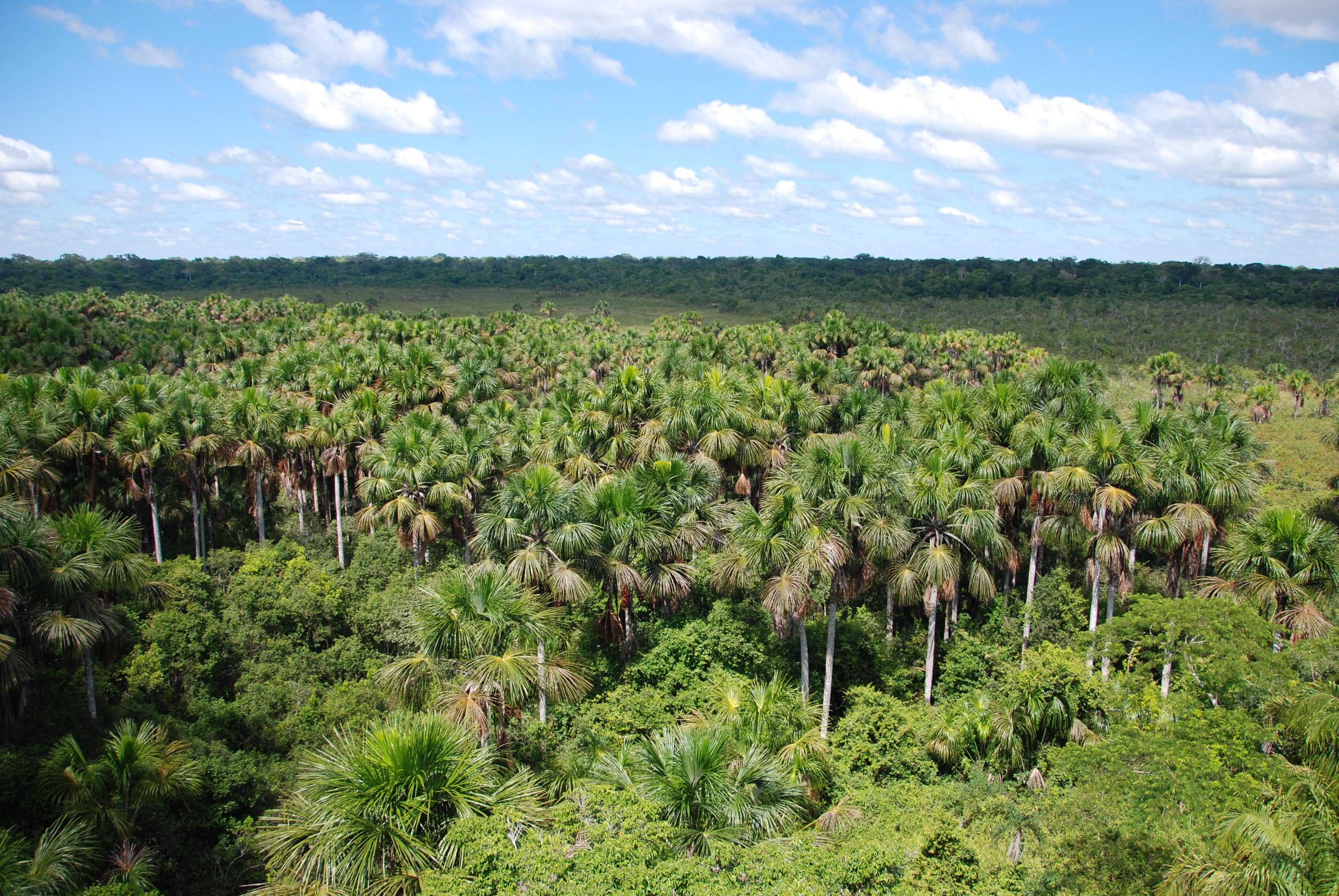 Magische momenten in de jungle van de Amazone