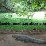 Gambia, meer dan alleen strand