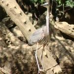 vogel lang