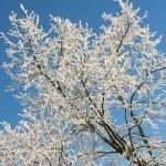 Winterwonderland bestemmingen