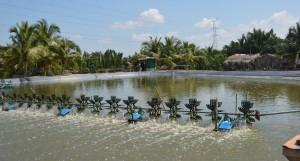 Garnalenfabriek, de wendels zorgen voor meer zuurstof in het water