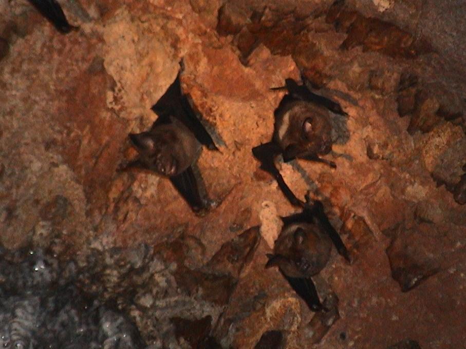 vleermuizen