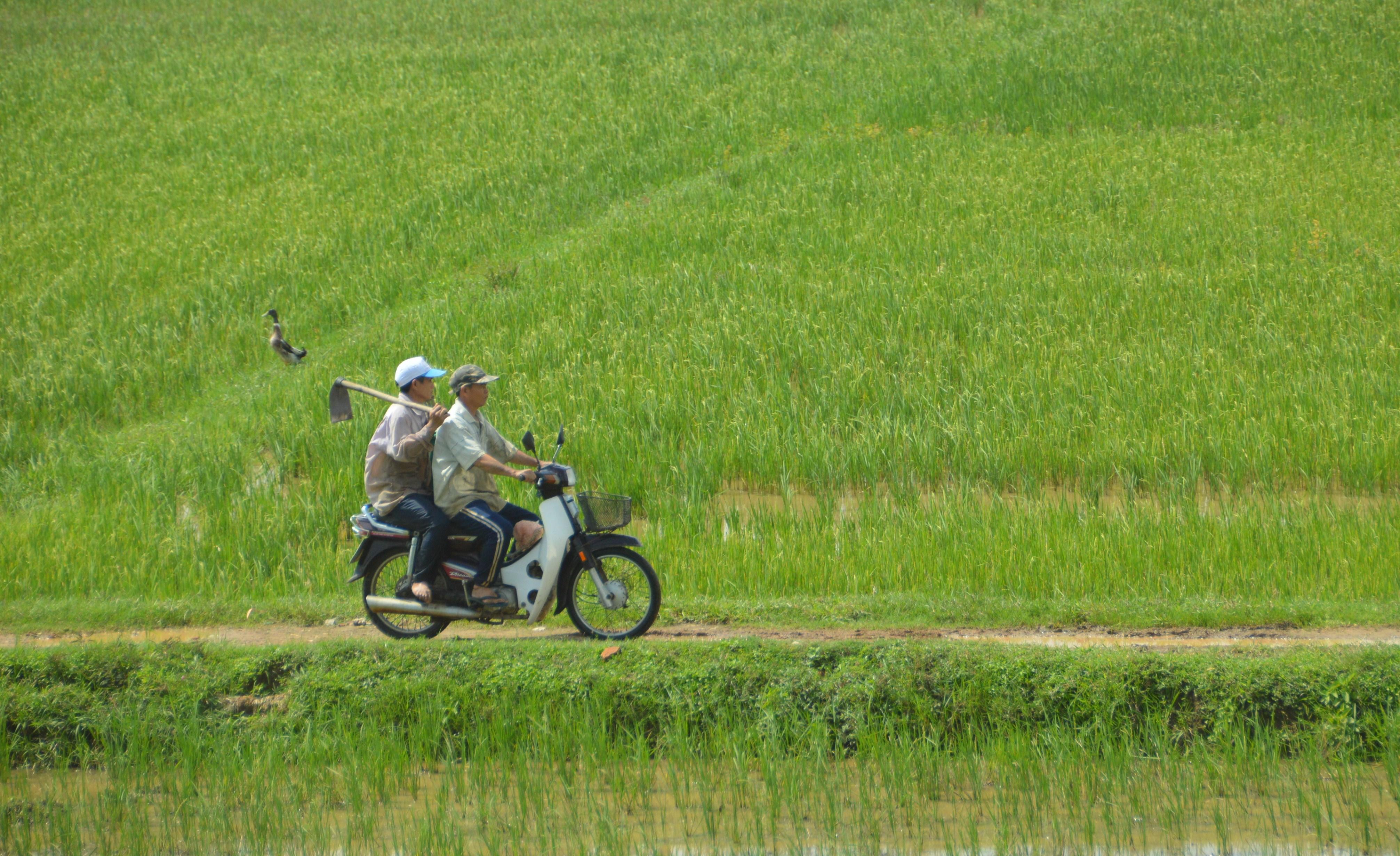 Klik #24: Brommer door de rijstvelden