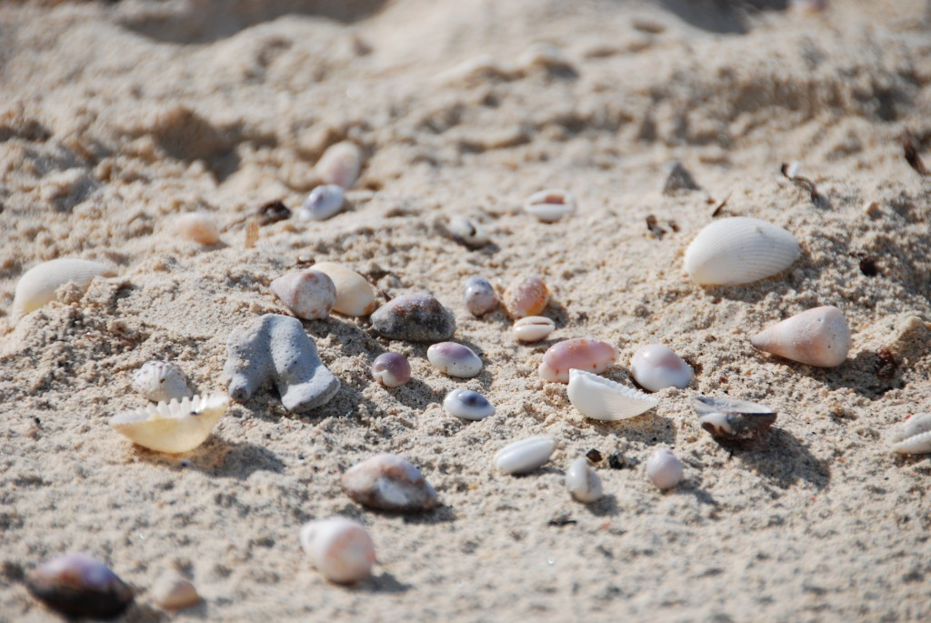 strand schelpen