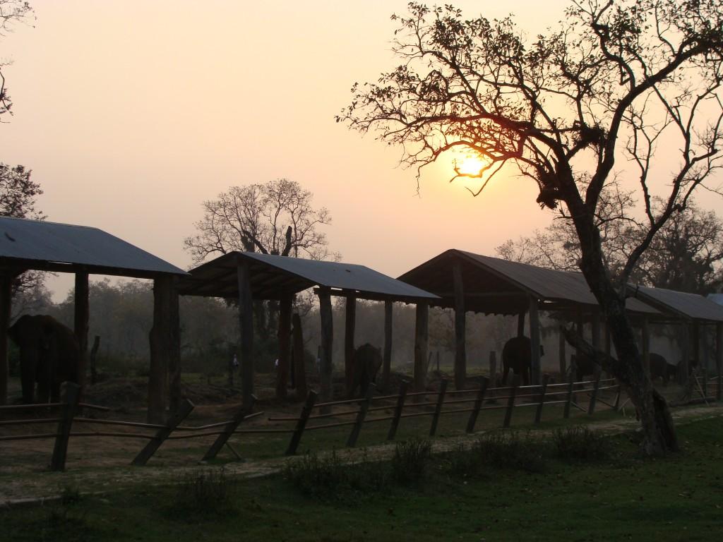 In Nepal heb ik een olifantenopvang bezocht en een donatie gedaan.