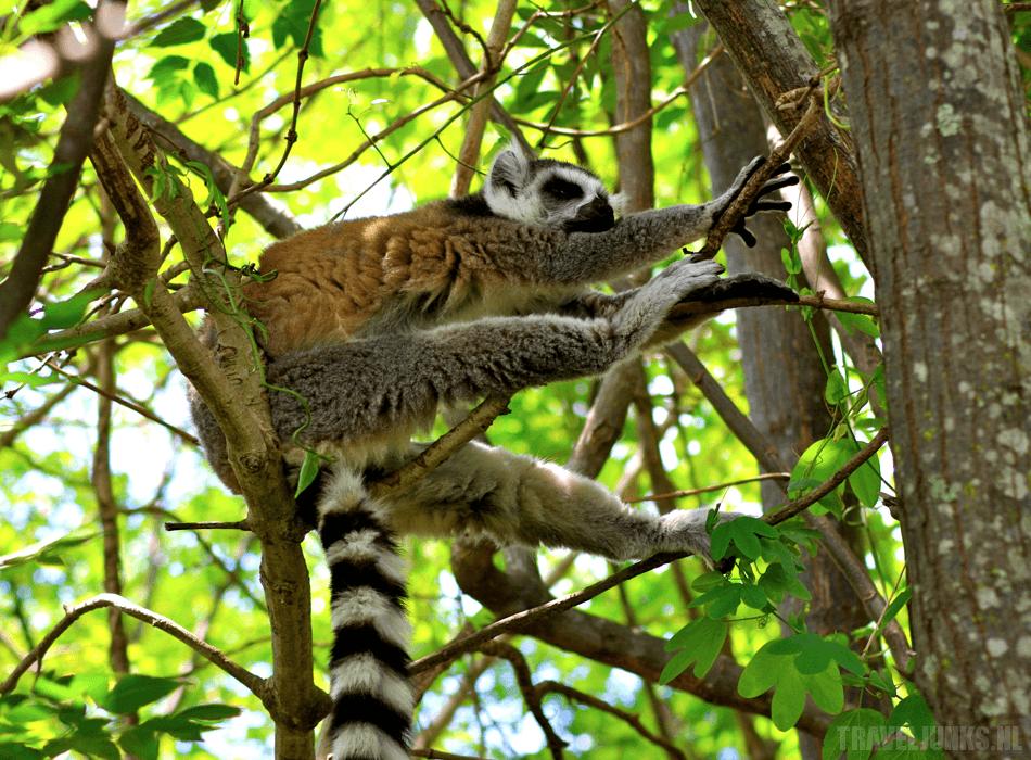 Madagaskar-hoogtepunten