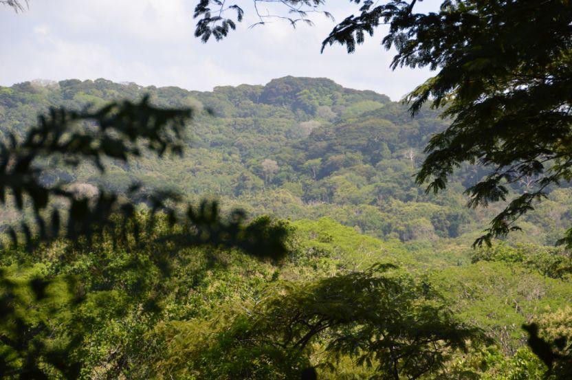4 Hotspots voor natuur en wildlife in Panama