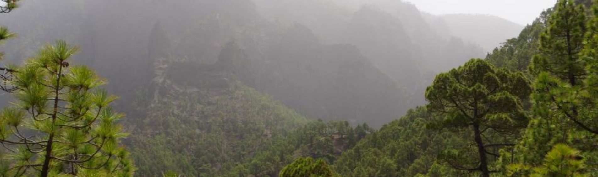 La Palma: De rondwandeling La Cumbrecita