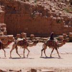 April 2019, olifanten en kamelen