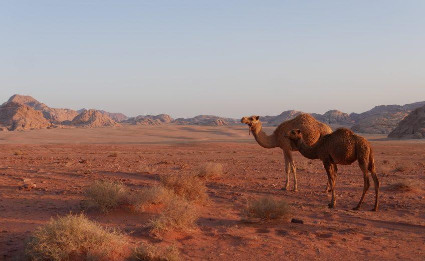 Alles over jeep tours en overnachten in de Wadi Rum woestijn