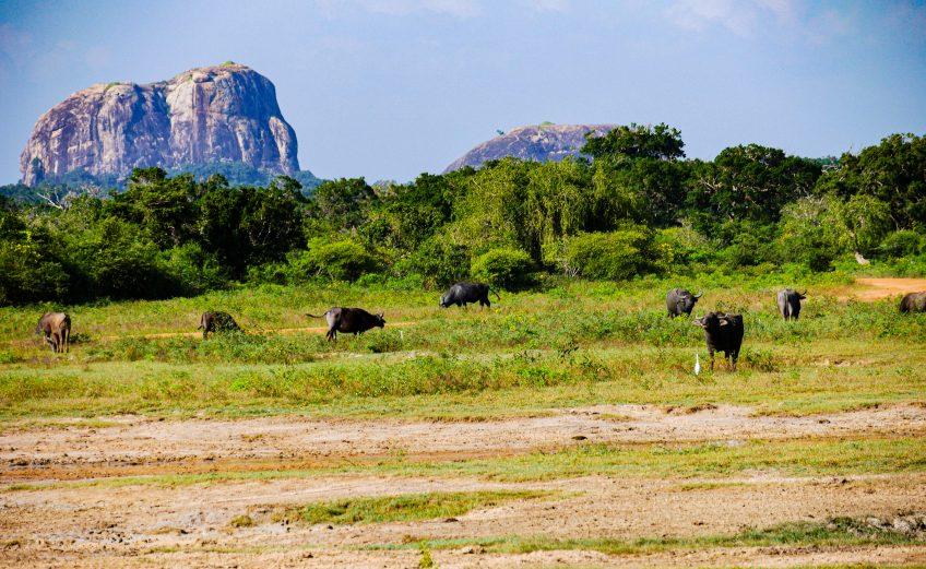 Dieren spotten tijdens een safari in Yala National Park