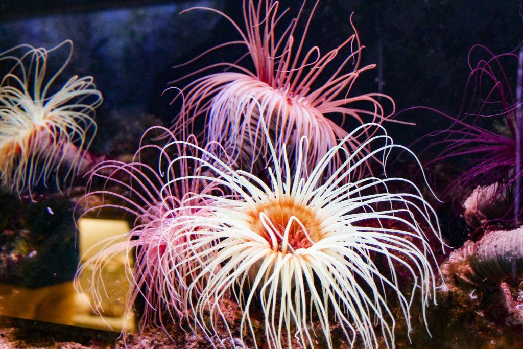 zee aquarium bergen aan zee castricum