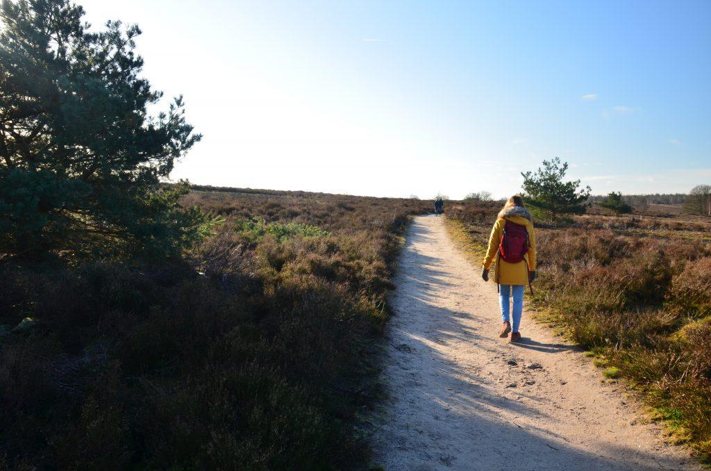 wandelen sallandse heuvelrug