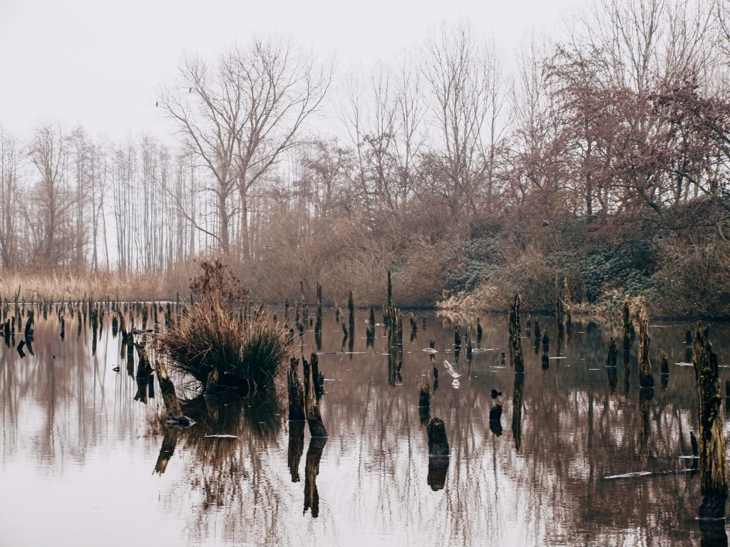 rondje linielanding wandeling utrecht verdronken bos