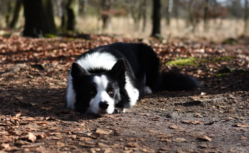 Met je hond op vakantie? Boek een huisdieren arrangement en neem je hond mee op vakantie